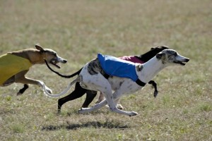 Conner Running